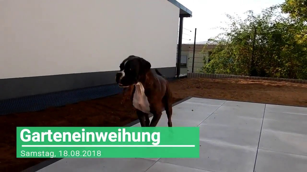 Samstag 18 08 2018 Der Zaun Steht Lufi Im Garten Youtube