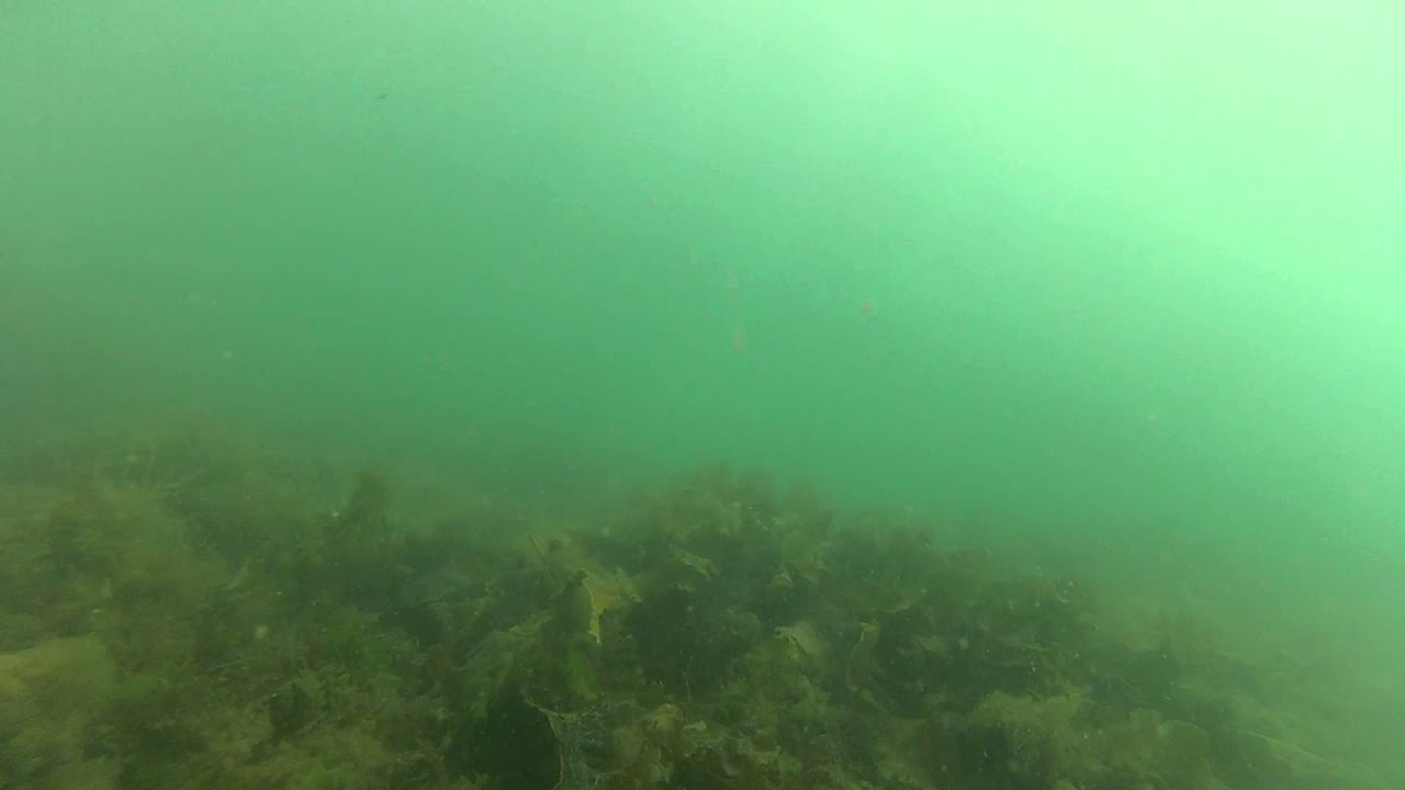 Wrasse Fishing With Underwater Camera Footage At Holyhead Breakwater Wales UK Part 3 Of