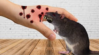 Stop motion Cooking - Making Mouse Soup / Stop Motion Food - Stop Motion 4K - Crazy Cooking Horror