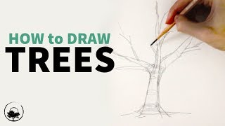 How to Sketch & Draw Trees - Understanding the Fundamentals