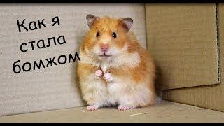 видео Хомяки