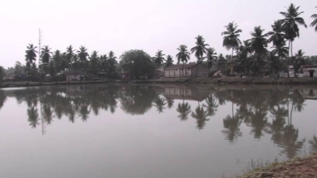 Fish Farm in andhra pradesh