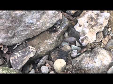 Long walk for this Adena Arrowhead (arrowhead hunt) Kentucky