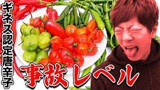 【危険】ギネス認定された世界最強とうがらし生で食べたら事故レベル