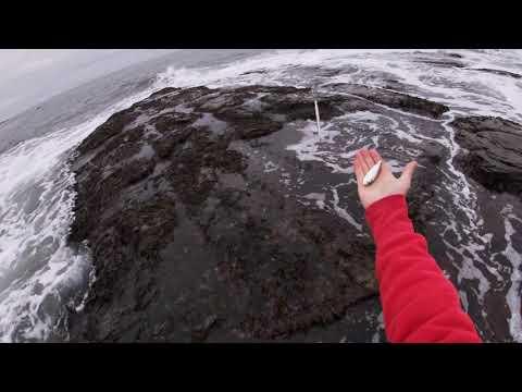 Late Season RI Striped Bass Fishing From The Shoreline