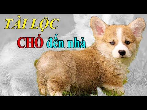 giải mã giấc mơ thấy chó đuổi tại kqxsmb.info
