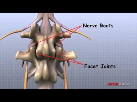 Giải phẫu thần kinh và xương sống (Tuyền chó mèo)