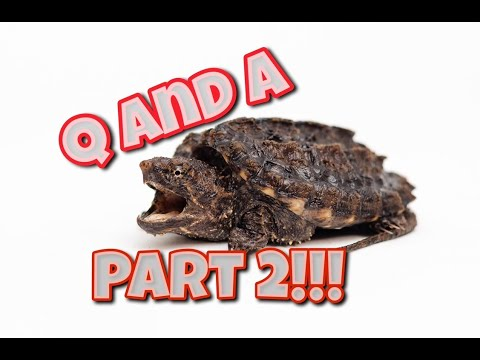 Q And A Vol 2: What Is The Best Snapping Turtle Diet, How To Tell Turtle's Age, Hybrids More!!
