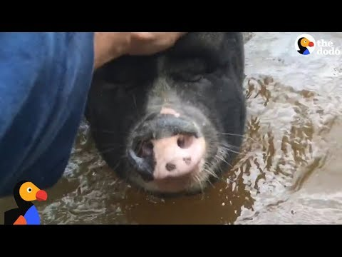 Farmer Reunites with Animals After Hurricane Harvey | The Dodo