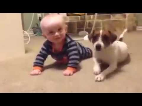 Pets Playhouse Kennel, Mumbai babies with dog , baby crawl