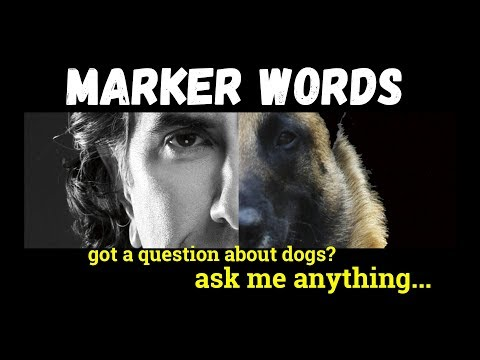 the-difference-between-good-and-yes---marker-words-in-dog-training---dog-training-video