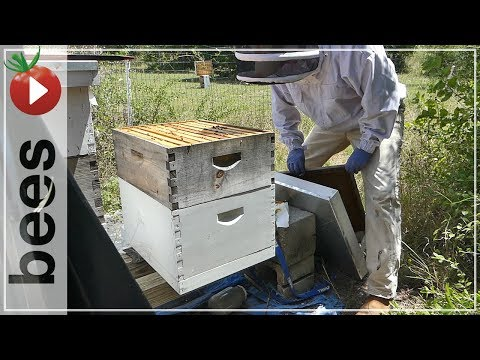 Beginning Beekeeping - Choose Wisely - Harvest Honey