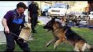 Attack Dog Training - Schutzhund Level 1