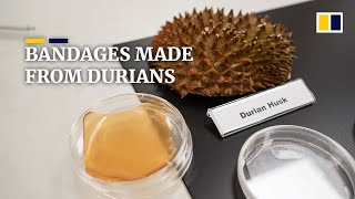 Download Singapore scientists make bandages out of durian husks