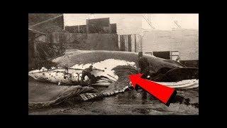Dünyanın En Büyük Megalodon'un Hikayesi - Nesli Tükendiği için çok şanslıyız.
