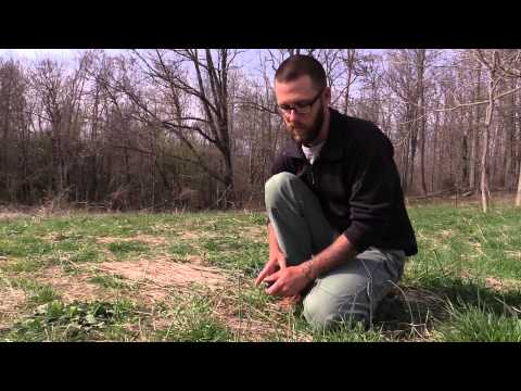 Earth Village Education Presents: Wild Virginia Edibles With Tom Brown III
