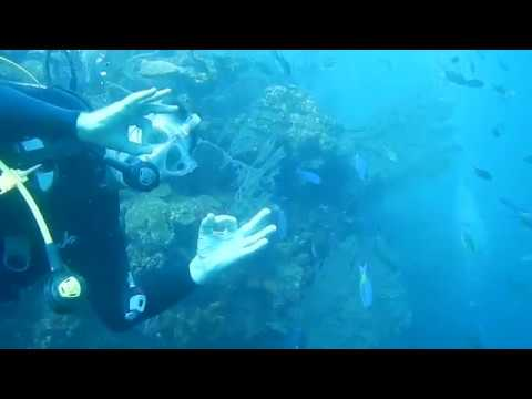 Learn to Dive and protect marine wildlife with Richmond Vale Academy