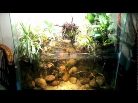 Jewel Cichlids Fry in the Paludarium