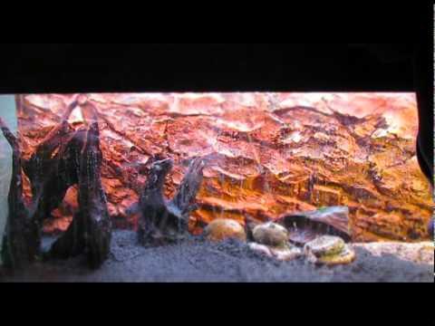 aquarium setup bioplast youtube. Black Bedroom Furniture Sets. Home Design Ideas