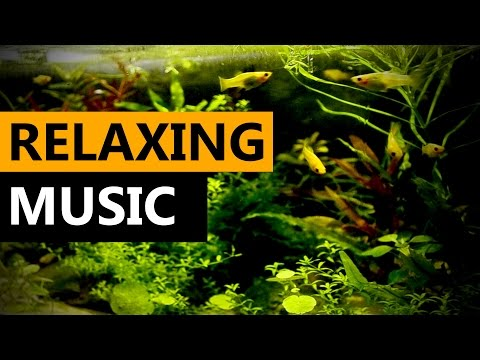 ► Relaxing Music For 3 Hours ► Molly Fish [Aquarium Sounds]