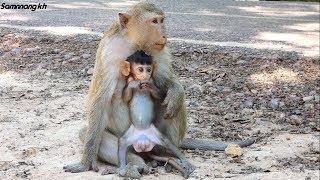 Brianna and Bronco, They really sweet family - Samnnang kh - baby monkey Bronco love mom so much