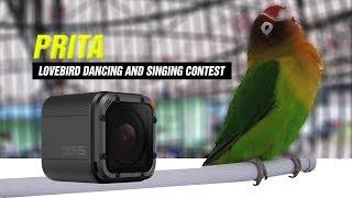Gambar cover GO PRO HERO 5 : LoveBird Dancing And Singing Contest | PRITA