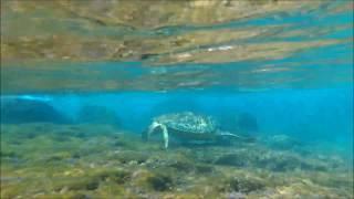 【小琉球浮潛】綠蠵龜 1