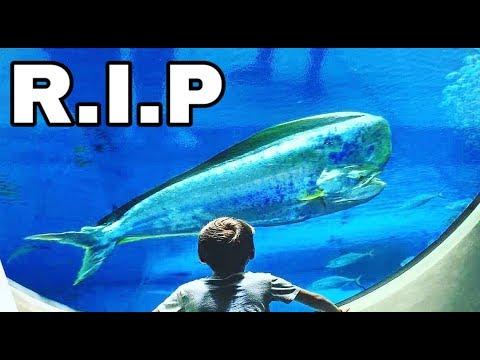 Mystical COLORFUL FISH DIES At MASSIVE Museum AQUARIUM!