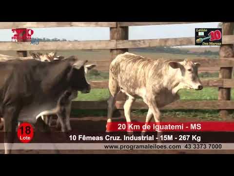 Lote 18   10 Fêmeas Cruz  Industrial   12M   267 Kg   20 Km de Iguatemi   MS