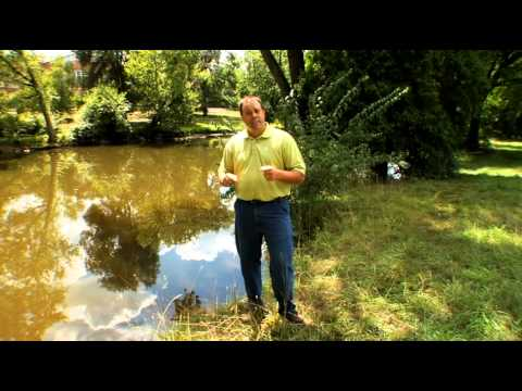 MSU Turf Tips - Managing lawns near water