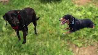 Shotzy, Abba & the Zanies Plush Dog Toy at Ruff Love Shop
