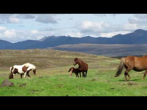 """Icelandic Horses, with """"Horse Of A Different Colour"""" audio by Dale M. Russell & Artemis Chartier"""