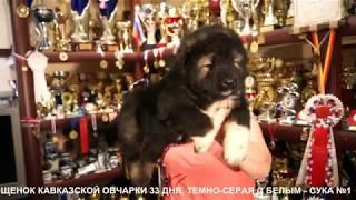 ЩЕНКИ КАВКАЗСКОЙ ОВЧАРКИ, 1 МЕСЯЦ. www.r-risk.ru +7 9262205603 Татьяна Ягодкина