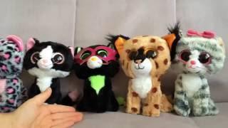 Глазастики, коллекция семейства кошачих из мягких глазастых игрушек TY
