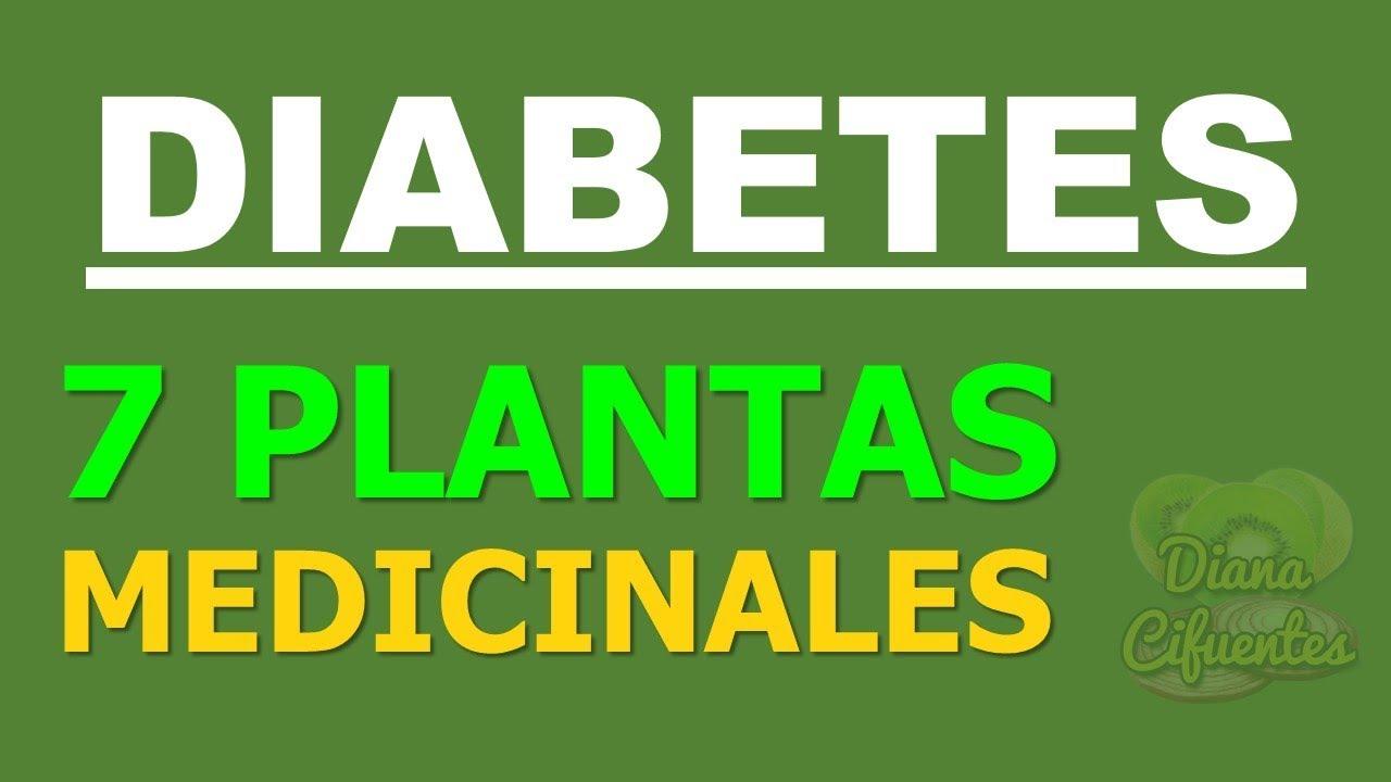 hierbas para la diabetes en chile