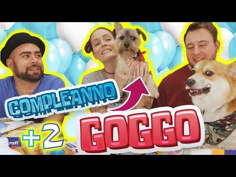 COMPLEANNO DI GOGGO! Facciamo la FESTA con POPOFF e apriamo tantissimi REGALI! 🍰🐕