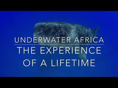 Underwater Volunteers - Mozambican Scientific Volunteer Programme