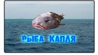 Русская рыбалка 3.99 Рыба-капля #1.