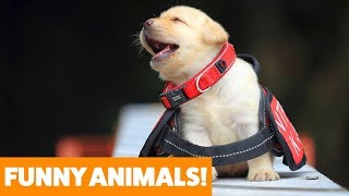 funniest-pets-animals-of-the-week-funny-pet-videos