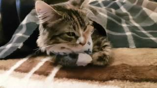 Стерилизация кошки день 2