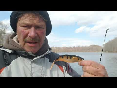 Marsh Creek Lake Shoreline Fishing Report 2/26/19