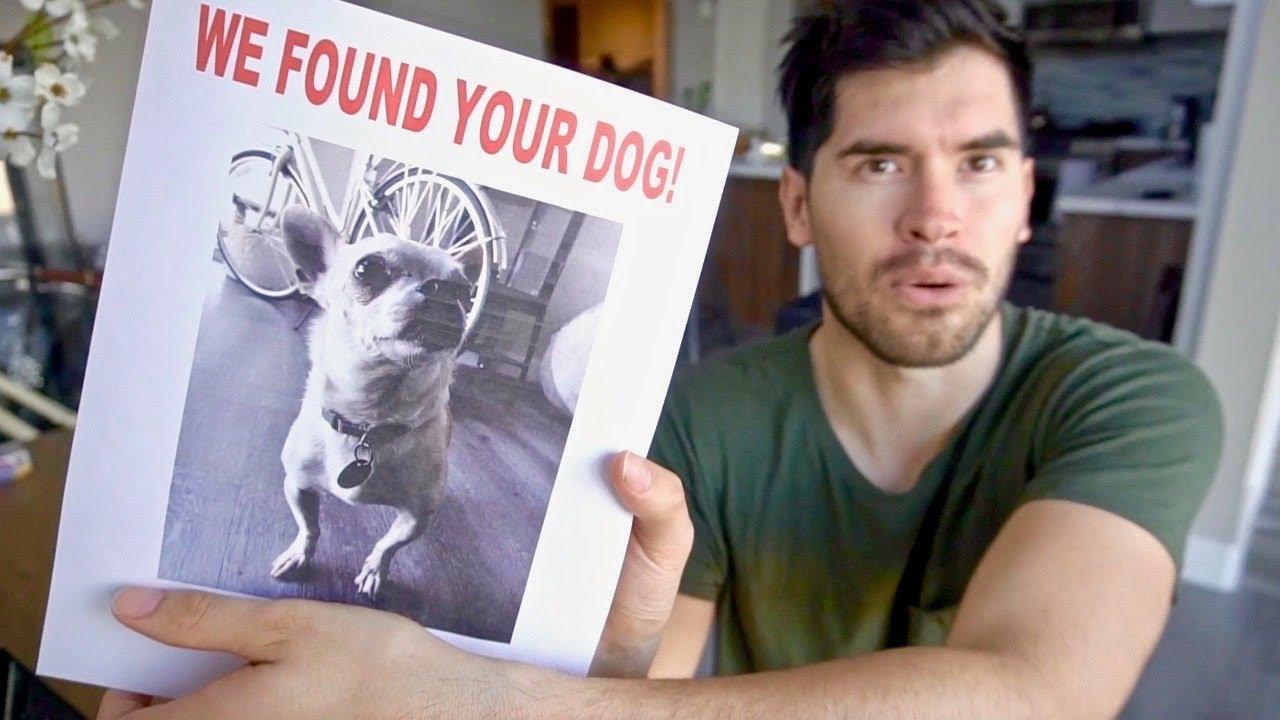 encontramos-un-perro-perdido
