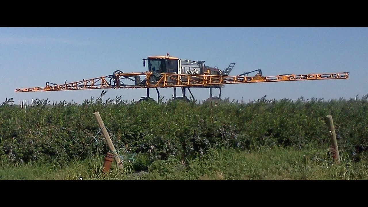 Hagie Super High Clearance Sprayer In Blueberries Youtube