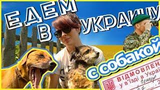 Как перевезти собаку через границу | УКРАИНА(, 2017-07-30T18:08:04.000Z)