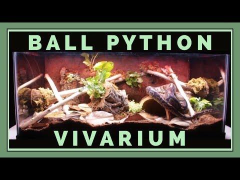 Building a Bioactive Ball Python Vivarium!