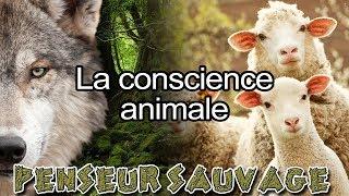 Les animaux ont-ils une conscience ? | [La conscience] - [Animaux CH.2 EP.05]
