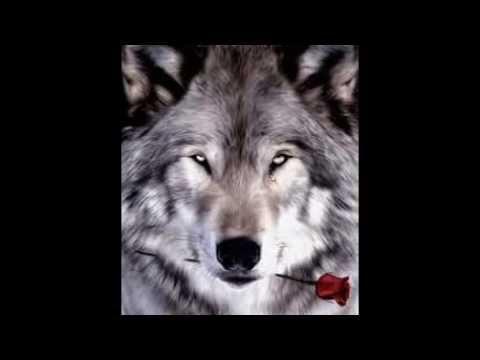 cachorros y lobos tiernos - YouTube