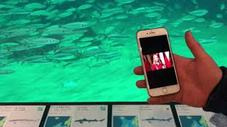 Aratag- How it works at the big ocean tank