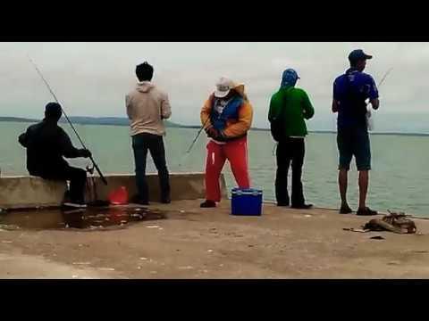 Sunday morning fun fishing mocho pier Tanjung Pinang people 🎣