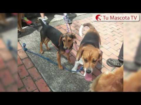 Los perritos del Parque El Renacimiento | Tu Mascota TV
